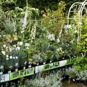 Spring Flowering Plants