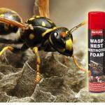wasp-nest-destroyer-1.jpg