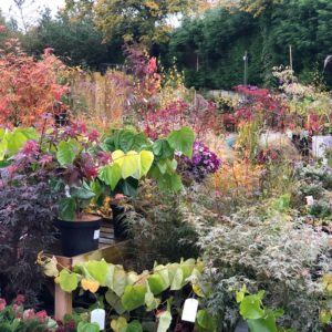 Ferndale Garden Plants