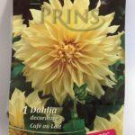 Dahlia-Cafe-au-Lait-scaled-1.jpg