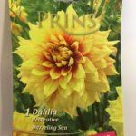 Dahlia-Dazzeling-Sun-scaled-2.jpg