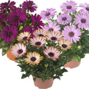 Instant Colour Plants