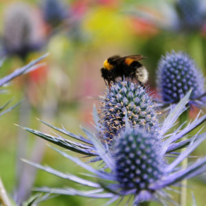 Plants for Bees and Butterflies