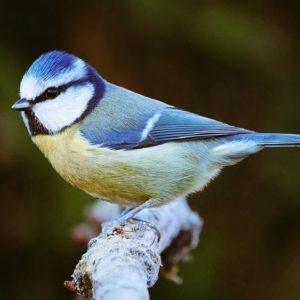Bird & Wildlife Gardening