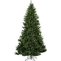 virgina-spruce-6ft.jpg