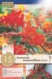 CROCOSMIA-CROCOSMIIFLORA-MIXED.jpg