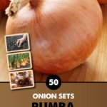 GCE-Vegetables-8711805062712.jpg
