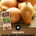 GCE-Vegetables-8711805062750.jpg