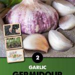 GCE-Vegetables-8711805062804.jpg