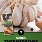 GCE-Vegetables-8711805062811.jpg