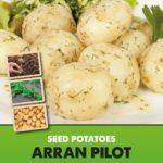 Posters-Potatoes-Arran-Pilot.jpg