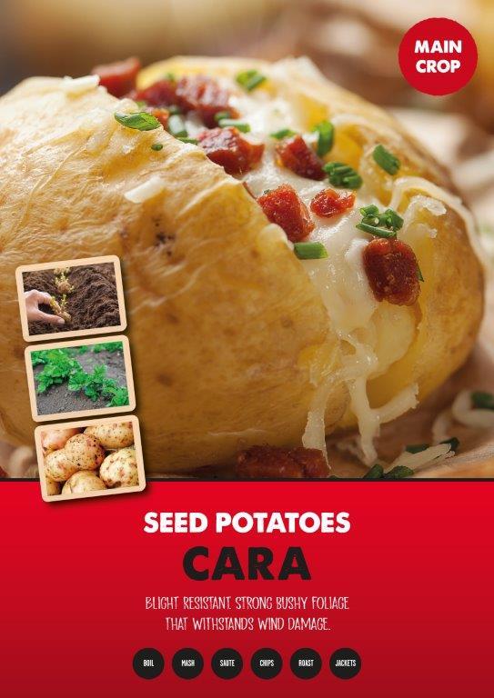 Posters-Potatoes-Cara.jpg