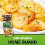 Posters-Potatoes-Home-Guard.jpg