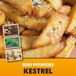 Posters-Potatoes-Kestrel.jpg