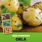 Posters-Potatoes-Orla.jpg