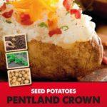 Posters-Potatoes-Pentland-Crown.jpg