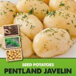 Posters-Potatoes-Pentland-Javelin.jpg