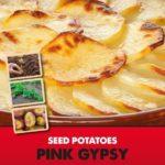 Posters-Potatoes-Pink-Gipsy.jpg