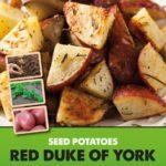 Posters-Potatoes-Red-Duke-of-York.jpg