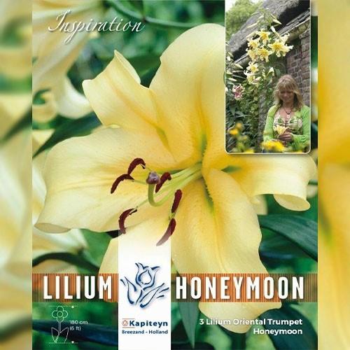 lilium_honeymoon.jpg