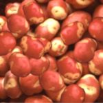 Buy 1kg Second Apache Seed Potatoes Online