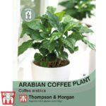 Arabian-Coffee-Plant.jpg