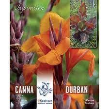 Canna-Durban.jpg