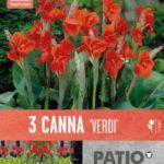 Canna-Verdi.jpg