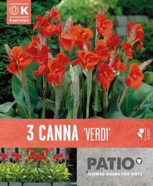 Buy Canna Indica Verdi Online