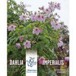Buy Dahlia Imperialis Online