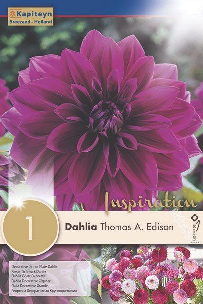 Dahlia-Thomas-A.-Edison.jpg
