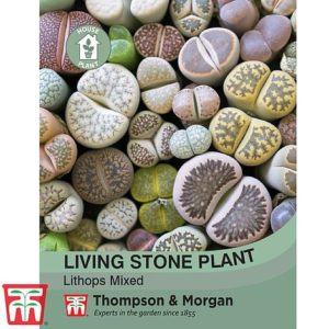 Houseplant Seeds