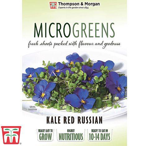 Buy Microgreens Kale Red Russian Online