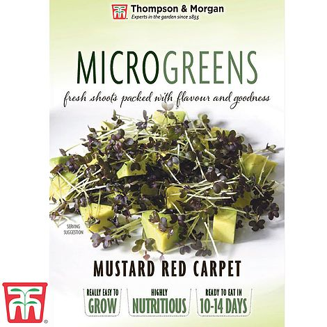 Buy Microgreens Mustard Red Carpet Online