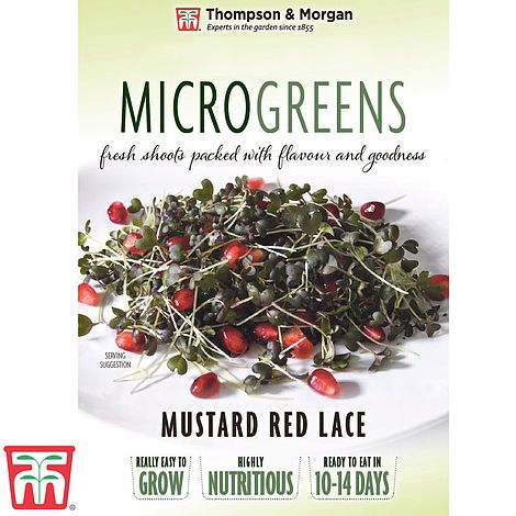 Buy Microgreens Mustard Red Lace Online