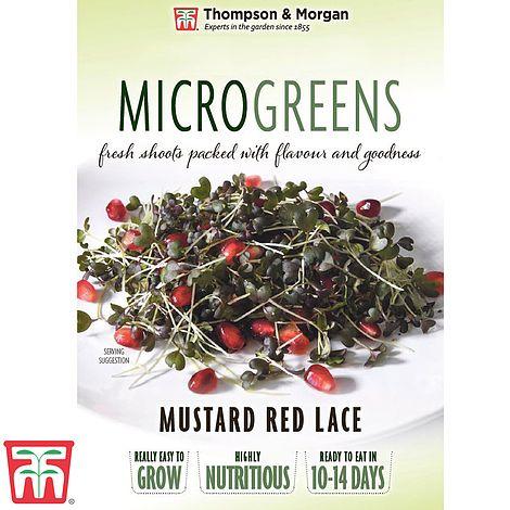 Microgreens-Mustard-Red-Lace.jpg