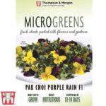 Microgreens-Pak-Choi-Purple-Rain.jpg