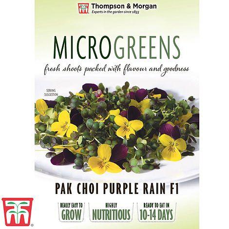 Buy Microgreens Pak Choi Purple Rain F1 Online