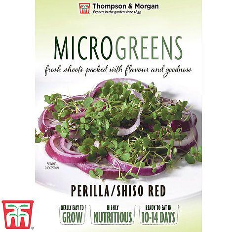 Buy Microgreens Perilla/Shiso Red Online