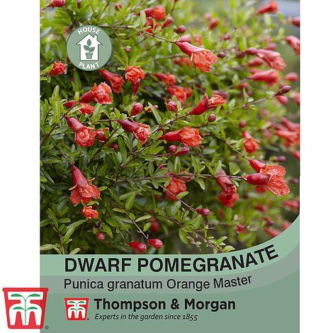 dwarf-pomegranate.jpg