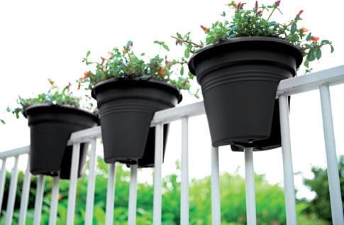 Buy Green Basics Flower Bridge Online