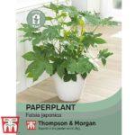paperplant.jpg