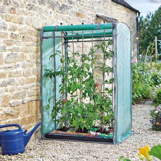tomato-grow-zone-max.jpgpg