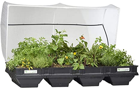 Buy Vegepod Large with Cover Online