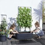 Buy Green Basics Veggy Wall Online