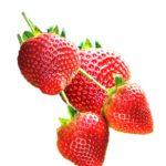 Buy Vitax Organic Strawberry feed Online