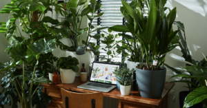 Office plants with Elho