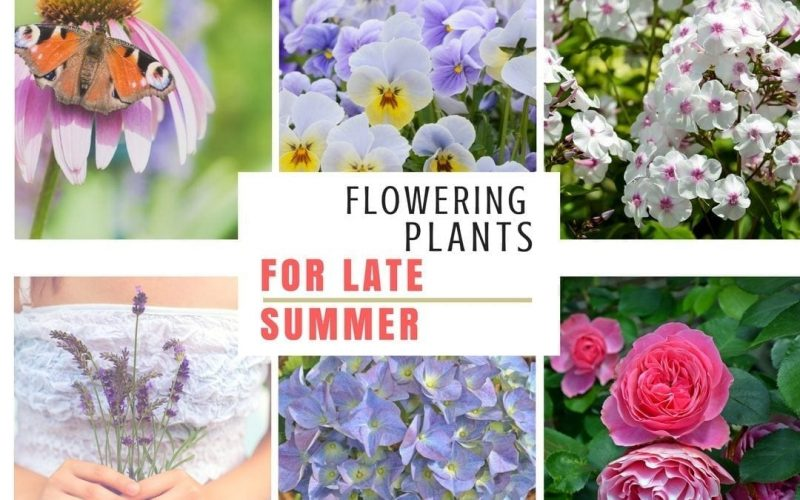 11 top plants for late summer pots and borders