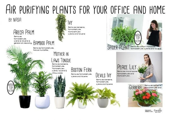 Air filtering house plants are good for you