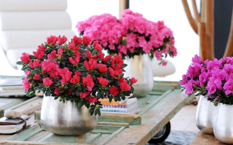 Bloom not gloom – Create your own winter of wonder